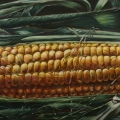 """Corn Wall"" 24 x 48 inches. oil on linen on wood panel."